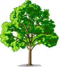 บริการ รับจ้าง ตัดแต่งต้นไม้ กิ่งไม้ โค่นต้น ขุดราก ต้นไม้ทุกชนิด พร้อมขนทิ้ง