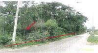 https://www.ohoproperty.com/84858/ธนาคารกรุงไทย/ขายที่ดินพร้อมสิ่งปลูกสร้าง/ตำบลคุ้งพยอม/อำเภอบ้านโป่ง/ราชบุรี/