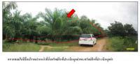 https://www.ohoproperty.com/64402/ธนาคารกรุงไทย/ขายที่ดินพร้อมสิ่งปลูกสร้าง/กำแพงเพชร/รัตภูมิ/สงขลา/