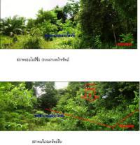 https://www.ohoproperty.com/1409/ธนาคารกรุงไทย/ขายที่ดินเปล่า/เหนือคลอง/เหนือคลอง/กระบี่/