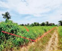 https://www.ohoproperty.com/140856/ธนาคารกสิกรไทย/ขายที่ดินว่างเปล่า/บึงบา/หนองเสือ/ปทุมธานี/