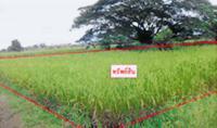 https://www.ohoproperty.com/102043/ธนาคารกสิกรไทย/ขายที่ดินว่างเปล่า/กล้วยแพะ/เมืองลำปาง/ลำปาง/