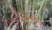 ขายที่ดินว่างเปล่า เลขที่ - อาคาร  ชั้น - หมู่บ้าน - ซอย ไม่มีชื่อ ถนน ธรรมคุณากร บางหญ้าแพรก เมืองสมุทรสาคร สมุทรสาคร ขนาด 0-2-74.80 ของ ธนาคารกสิกรไทย