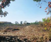 https://www.ohoproperty.com/140057/ธนาคารกสิกรไทย/ขายที่ดินว่างเปล่า/หนองลาด/วาริชภูมิ/สกลนคร/