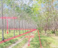 ที่ดินว่างเปล่าหลุดจำนอง ธ.ธนาคารกสิกรไทย ควนโพธิ์ เมืองสตูล สตูล