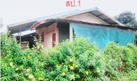 https://www.ohoproperty.com/104934/ธนาคารกสิกรไทย/ขายบ้านเดี่ยว/ป่าไผ่/ลี้/ลำพูน/