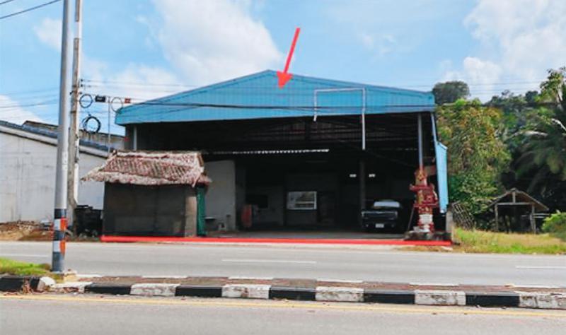 ต้นยวน พนม สุราษฎร์ธานี