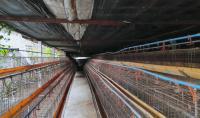 ฟาร์มหลุดจำนอง ธ.ธนาคารกสิกรไทย น้ำดิบ ป่าซาง ลำพูน