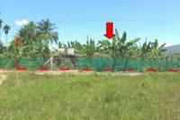 https://www.ohoproperty.com/18701/ธนาคารไทยพาณิชย์/ขายที่ดินว่างเปล่า/เขาพนม/เขาพนม/กระบี่/