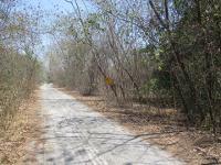 ขายที่ดินเปล่า ถนนเพชรเกษม(ทล.4) สระพัง เขาย้อย จังหวัดเพชรบุรี ขนาด 2-0-23 ไร่ ของ ธนาคารกรุงศรีอยุธยา