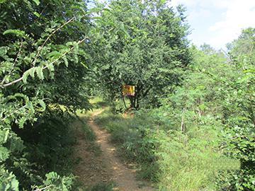 โครงการแกรนด์การ์เด้นแอนด์กอล์ฟคลับ ถนนกาญจนบุรี-บ้านเก่า (ทล.3229) ลาดหญ้า เมือง จังหวัดกาญจนบุรี