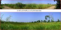 ที่ดินเปล่าแปลงใหญ่หลุดจำนอง ธ.ธนาคารธนชาต องค์รักษ์ องค์รักษ์ นครนายก